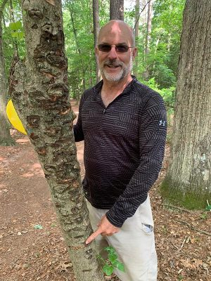 Trees hit at spilman disc golf course